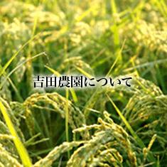 toppage/吉田農園を知りたい!